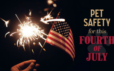 Pet Safety for this Fourth of July