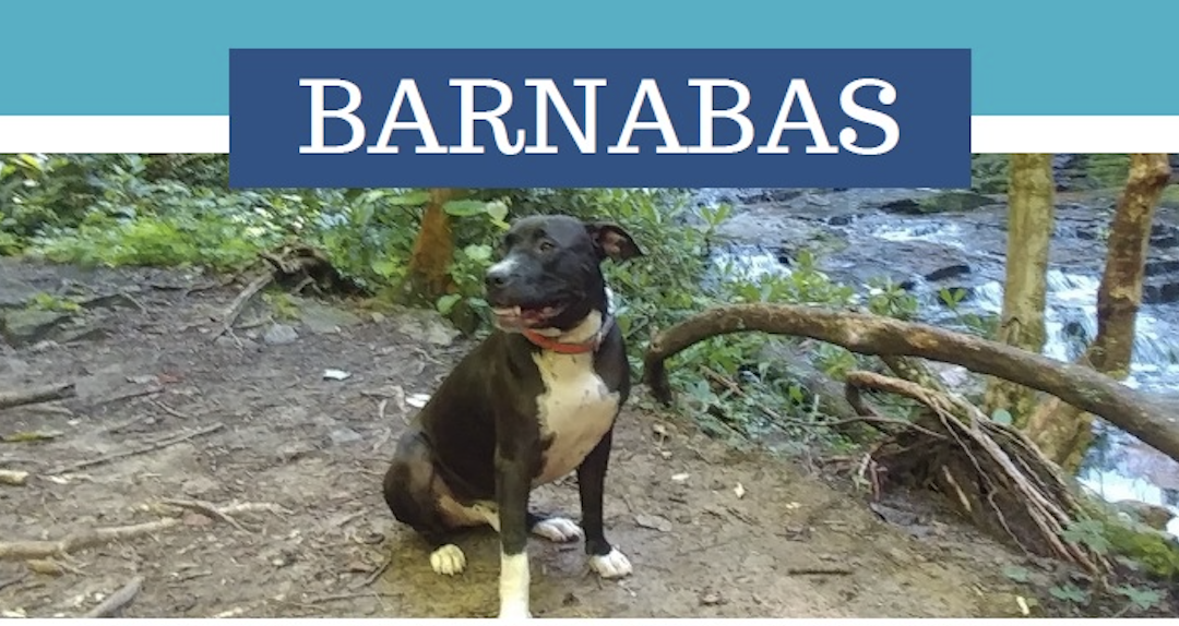 Barnabas looking for a new family