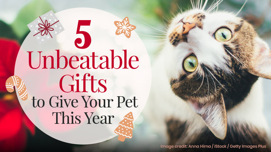5 Unbeatable Gifts to Give Your Pet This Year