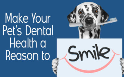 Make Your Pet's Dental Health a Reason to Smile